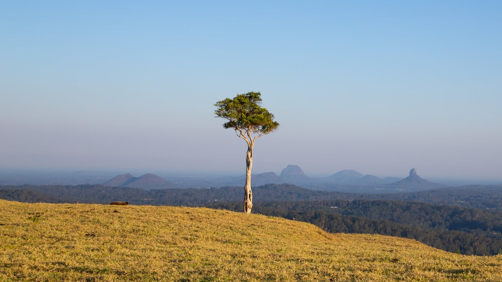 Maleny featuring tranquil scenes