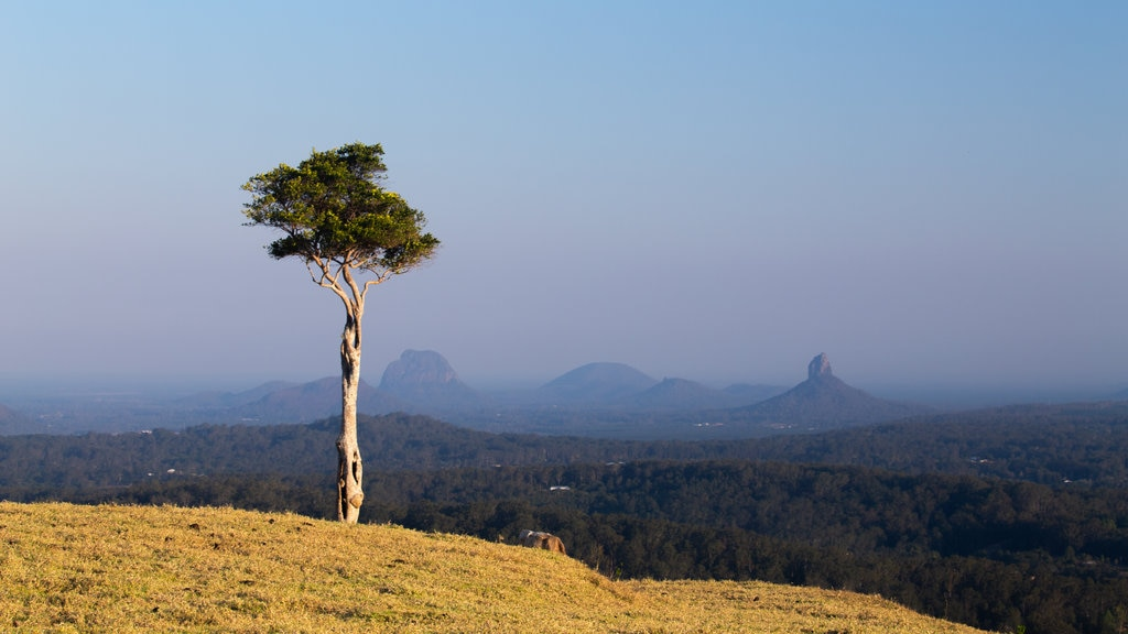 Maleny showing tranquil scenes