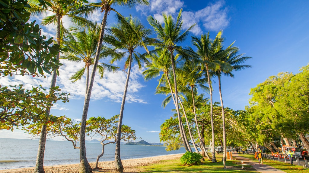 Palm Cove which includes general coastal views, a beach and tropical scenes