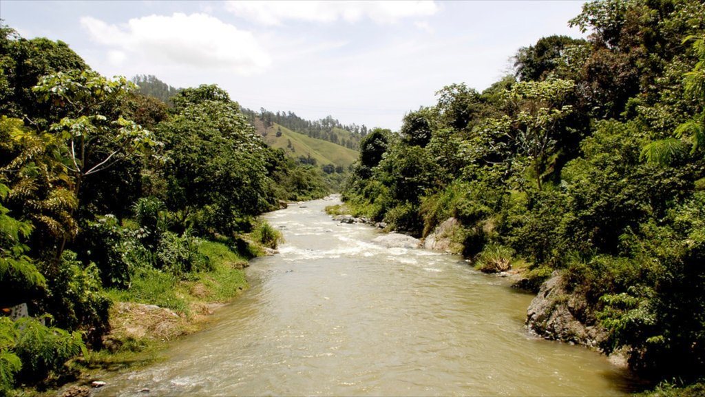 Jarabacoa which includes landscape views, rainforest and a river or creek
