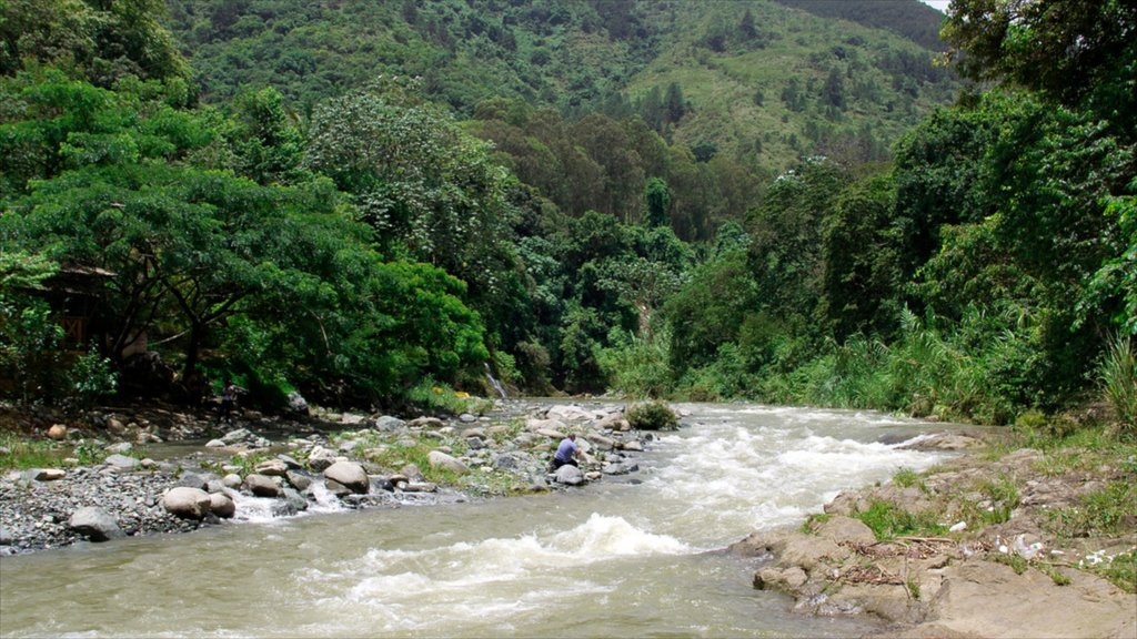 Jarabacoa featuring forests and a river or creek