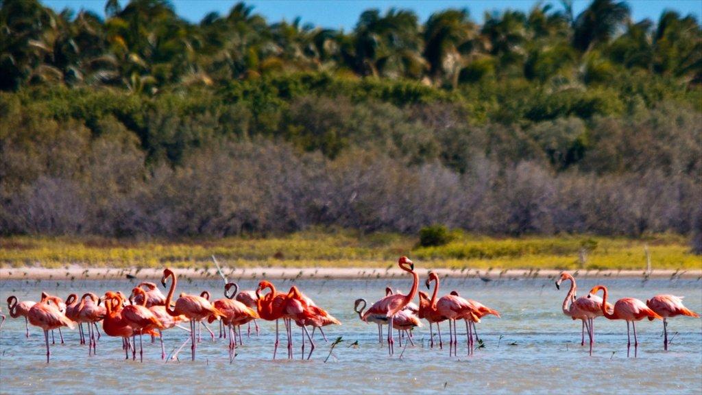 Barahona som visar kustutsikter och fåglar