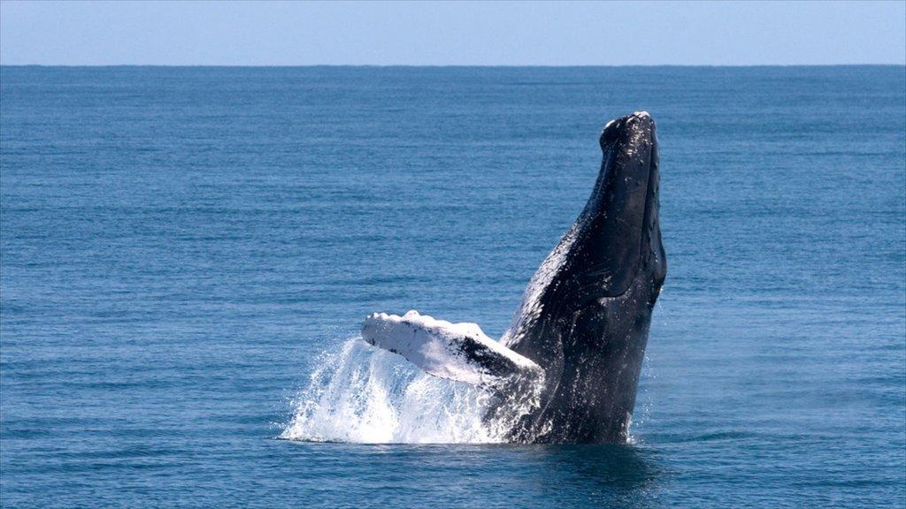 Samana som visar havsdjur och valskådning