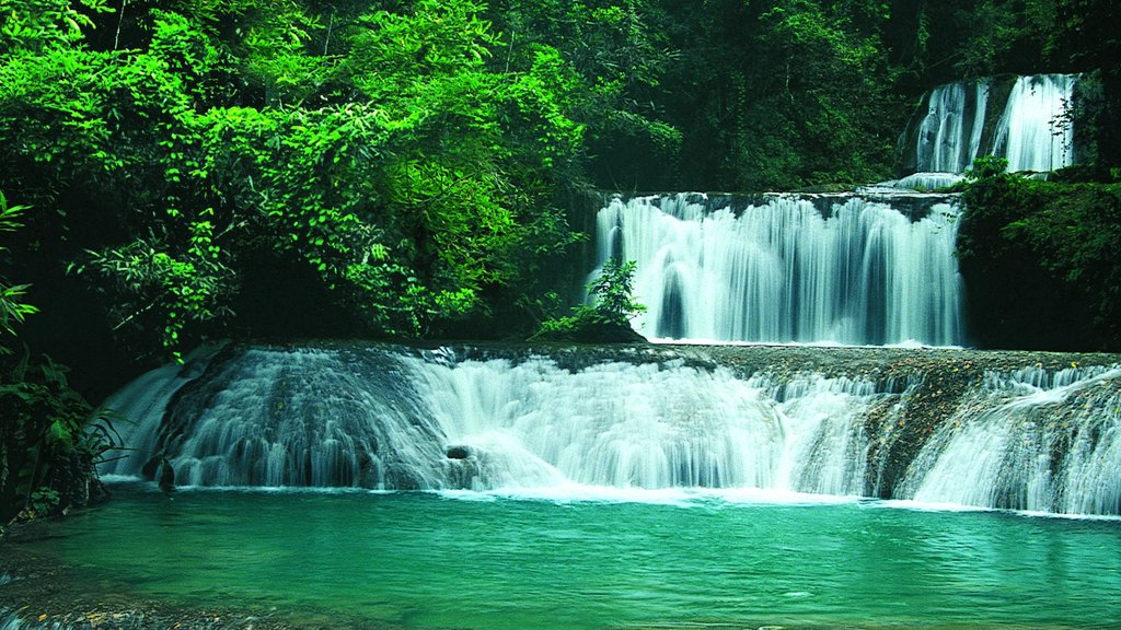 YS Falls featuring a waterfall and rainforest