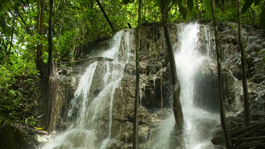 Somerset Falls which includes a waterfall and forests