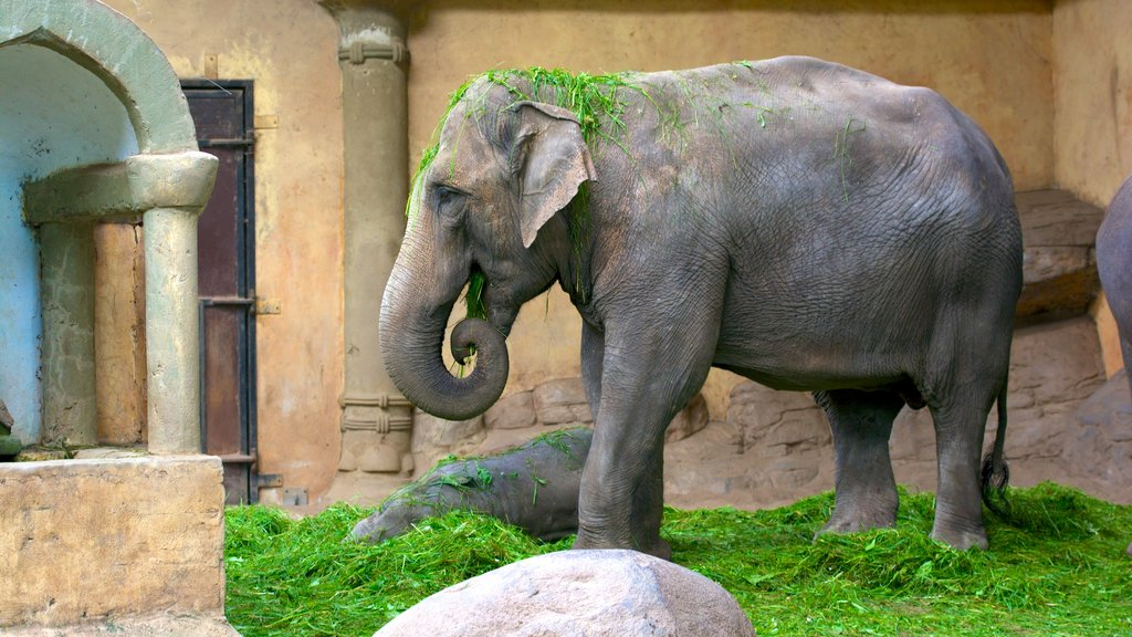 Hagenbeck Zoo featuring land animals and zoo animals