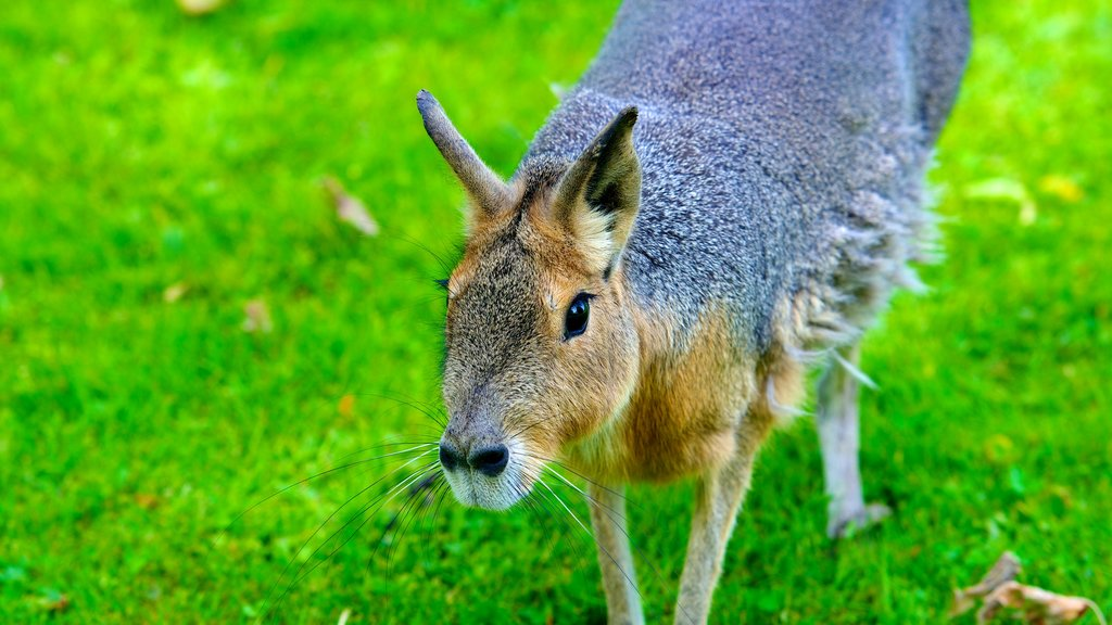 Hagenbeck Zoo which includes cuddly or friendly animals and zoo animals