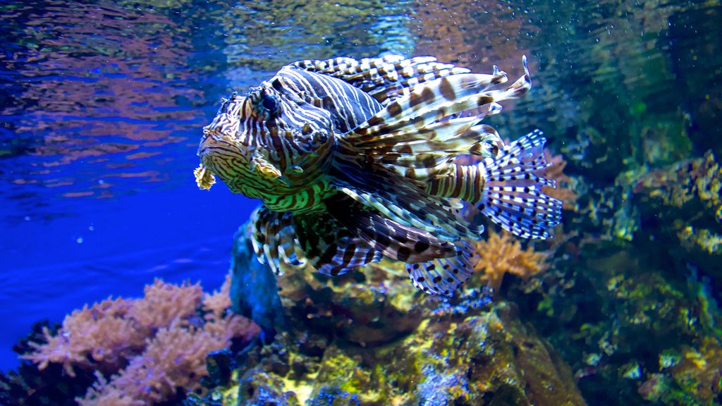 Cologne Zoo which includes colorful reefs and marine life