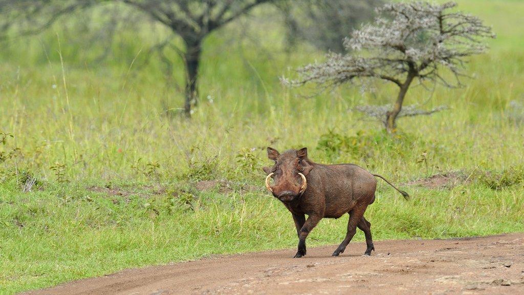 Kenia que incluye animales terrestres