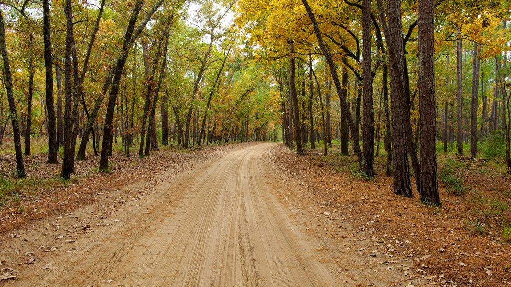 Myrtle Beach que incluye escenas forestales y los colores del otoño