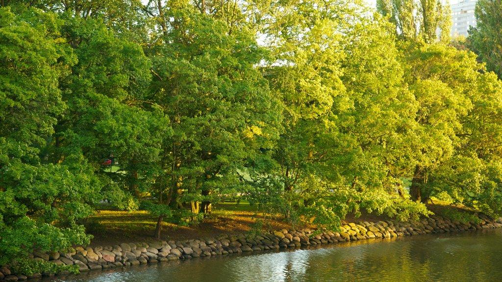 Kungsparken ofreciendo un estanque y un parque