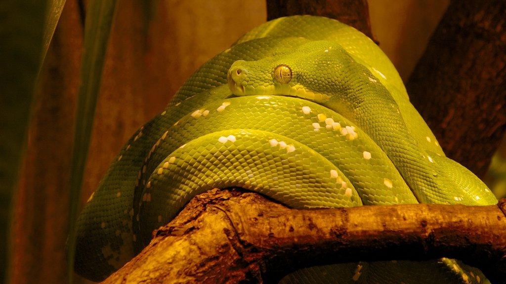 Malmohus ofreciendo animales del zoológico y animales peligrosos