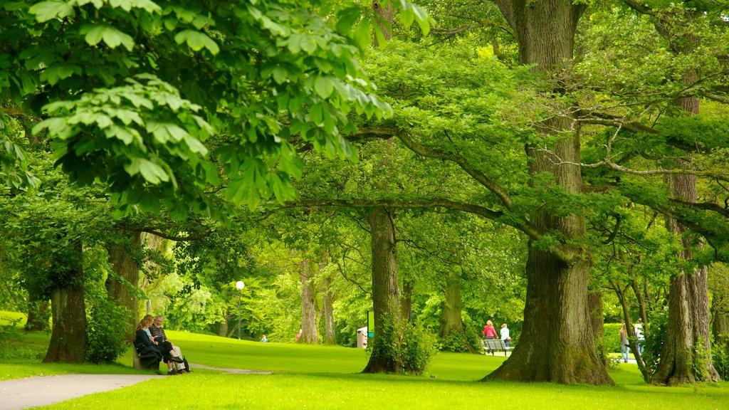 Castle Forest showing a park