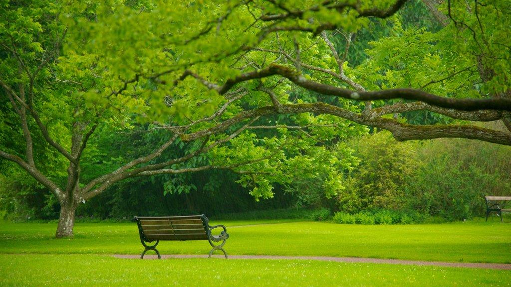 Jardín botánico que incluye un jardín