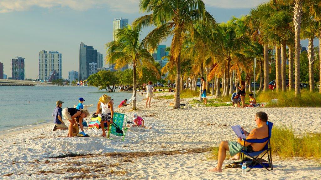 Miami mostrando una ciudad, escenas tropicales y una playa de arena