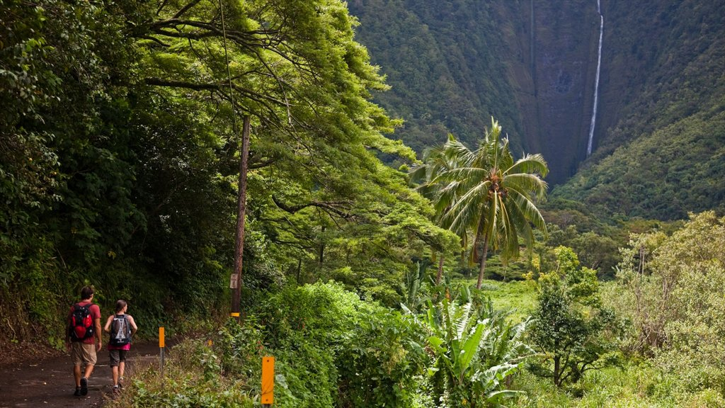 Honokaa which includes hiking or walking and rainforest as well as a couple