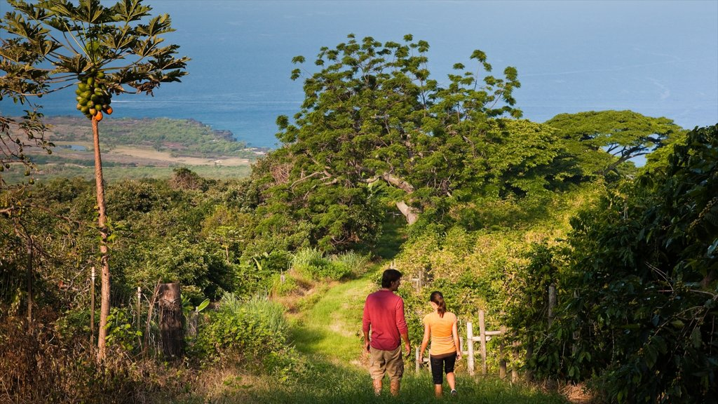 Kealakekua showing hiking or walking and tranquil scenes as well as a couple