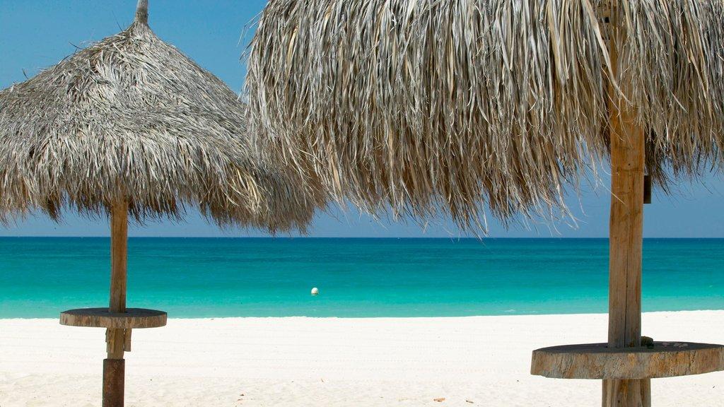 Aruba showing a sandy beach and tropical scenes