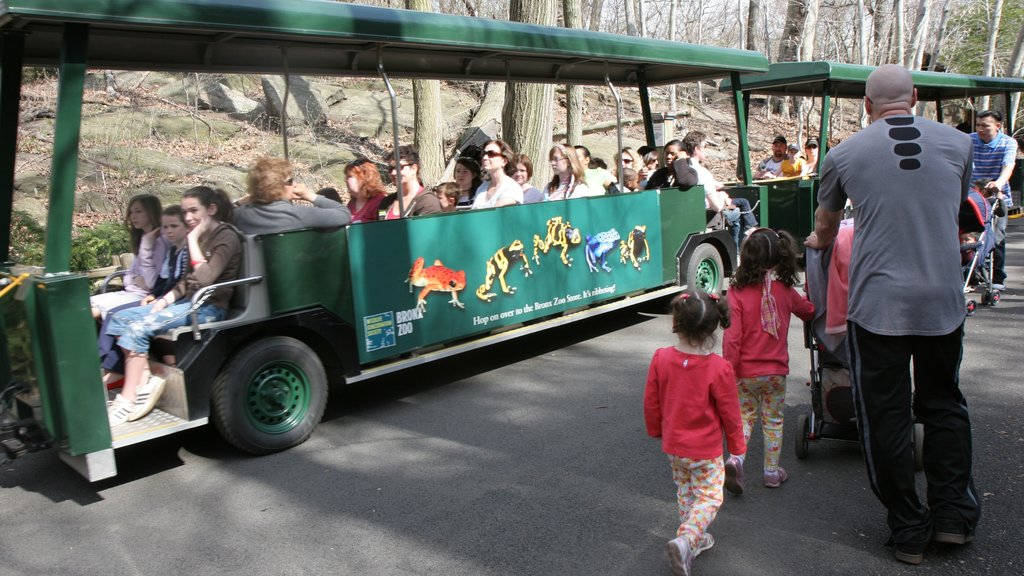 Bronx Zoo showing zoo animals and vehicle touring as well as a family