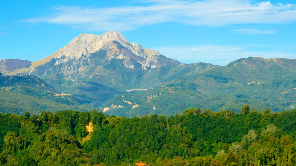 Barga which includes forests and mountains