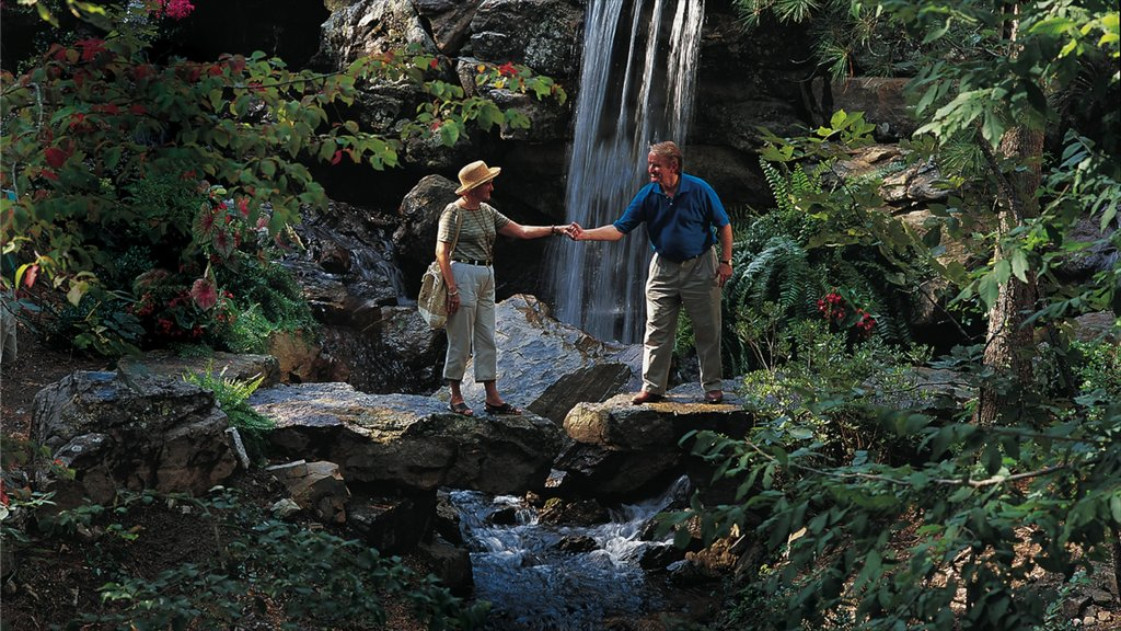 Hot Springs mostrando una catarata, selva y senderismo o caminata