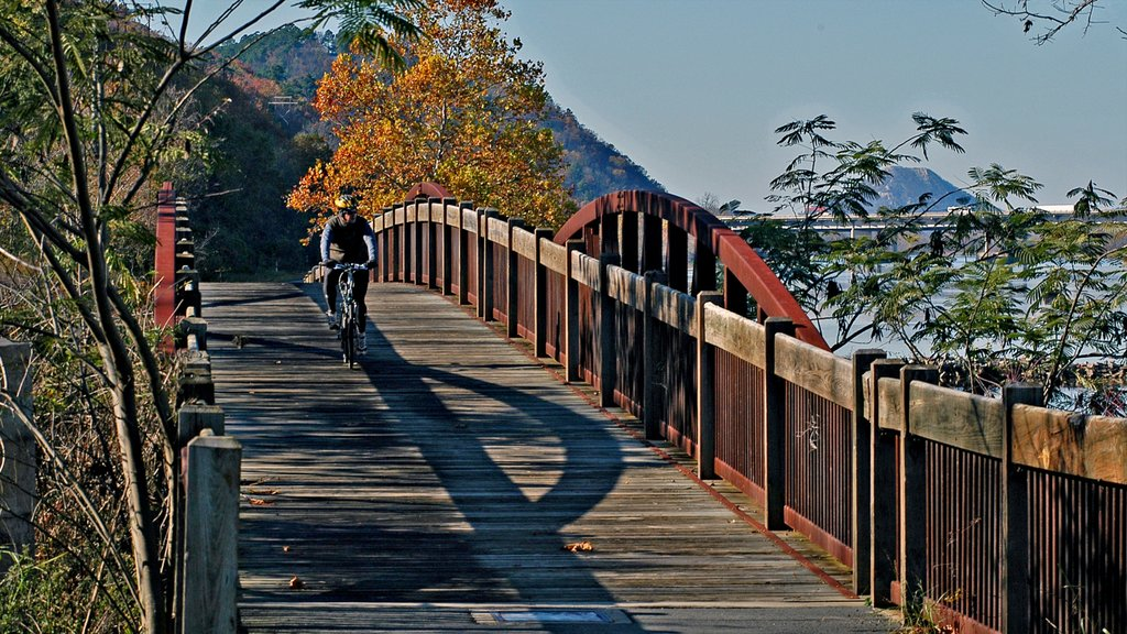 Little Rock showing a bridge, cycling and autumn leaves
