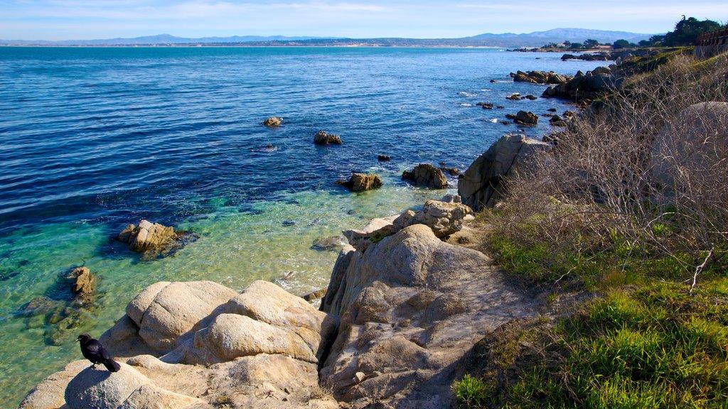 Monterey ofreciendo costa escarpada