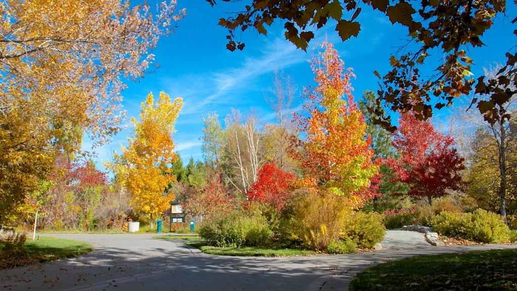 Rancho San Rafael Park mostrando un parque y los colores del otoño
