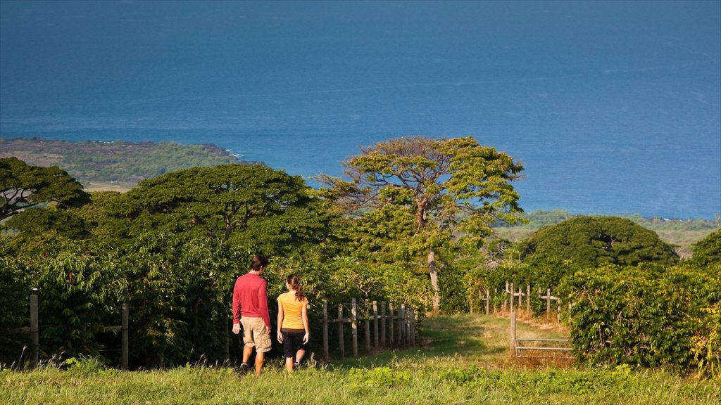 Kealakekua featuring hiking or walking and general coastal views as well as a couple
