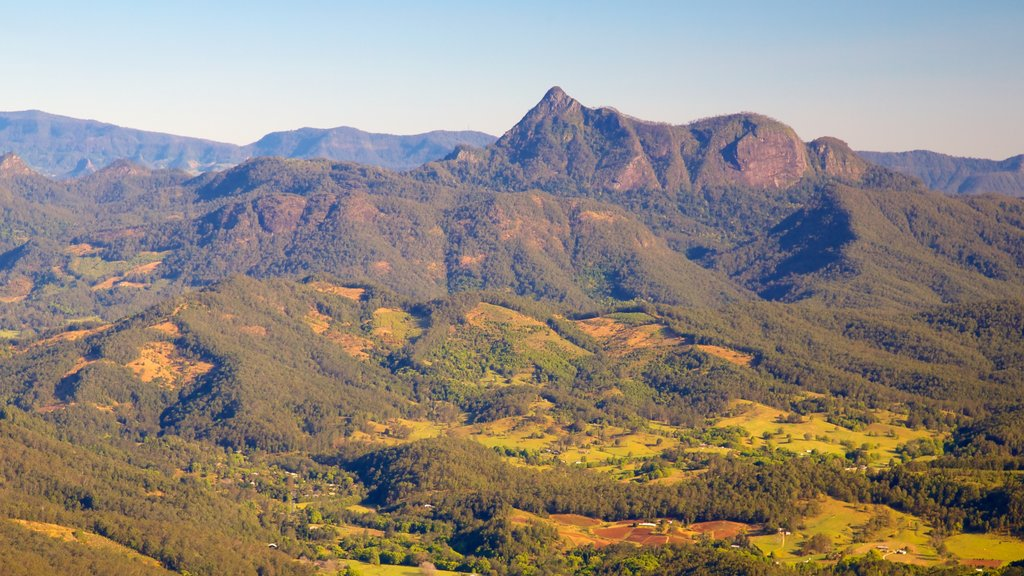 Springbrook National Park showing landscape views, forest scenes and mountains