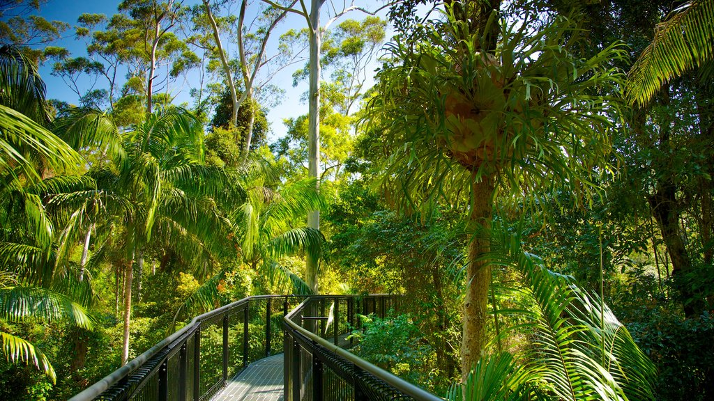 Mount Tamborine which includes a suspension bridge or treetop walkway and rainforest