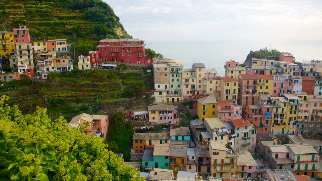 Manarola showing a coastal town