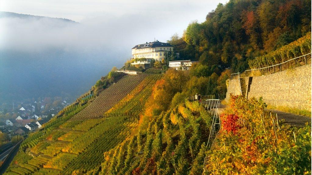 Bad Neuenahr-Ahrweiler showing mist or fog, mountains and landscape views