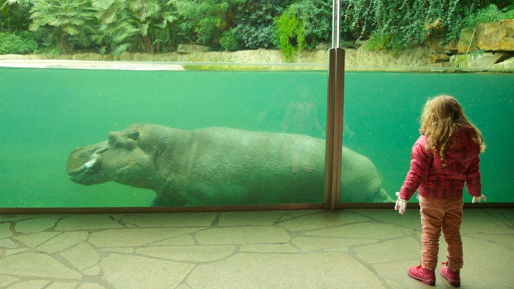 Berlin Zoo featuring interior views, marine life and zoo animals