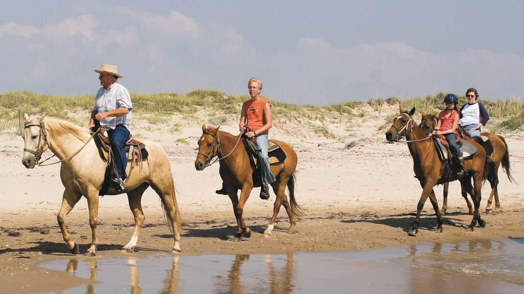 South Padre Island featuring land animals, horseriding and a beach
