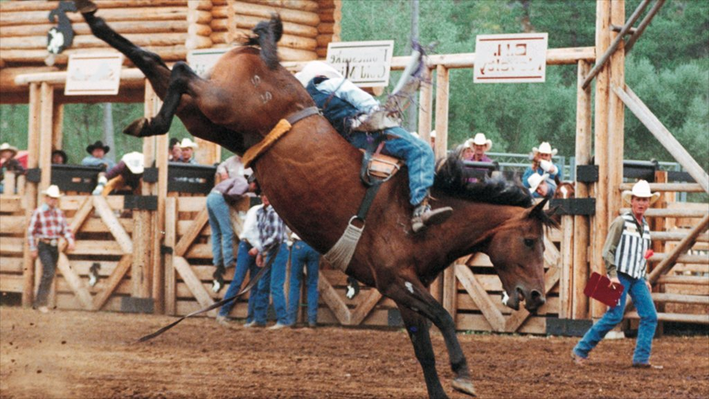 Deadwood showing land animals, performance art and horseriding