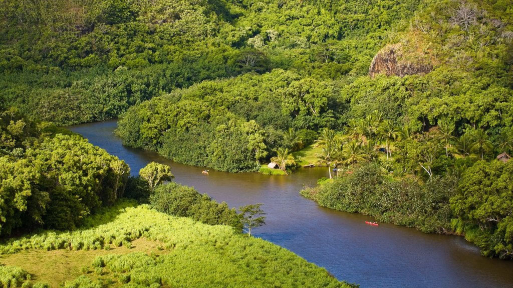 Wailua River State Park featuring forests and a river or creek