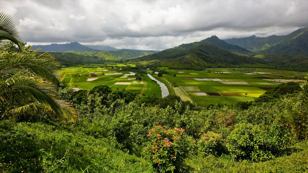Hanalei Valley Lookout featuring landscape views, farmland and mountains