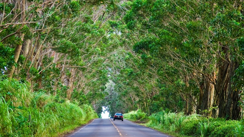 Koloa which includes forest scenes and vehicle touring
