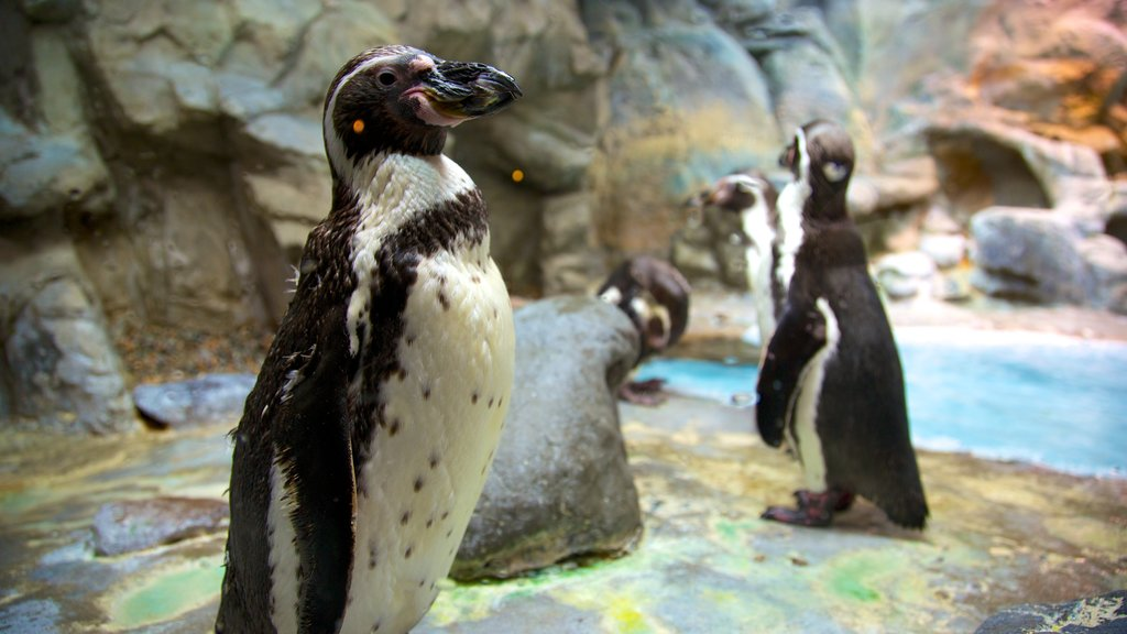 Aquarium of Niagara which includes bird life and marine life