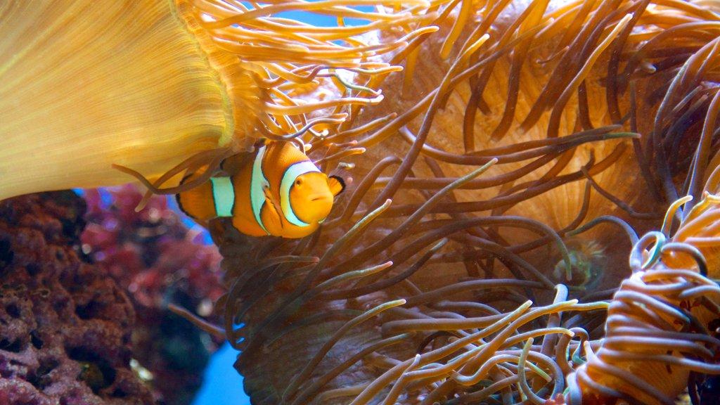 Aquarium of Niagara showing marine life