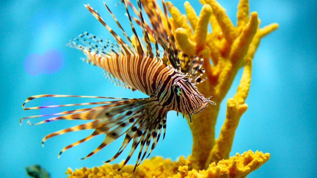 Aquarium of Niagara which includes marine life and coral