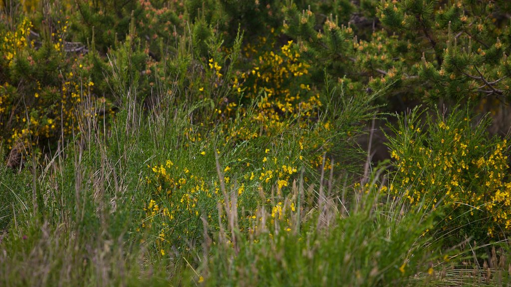 South Beach State Park showing wildflowers, a garden and flowers