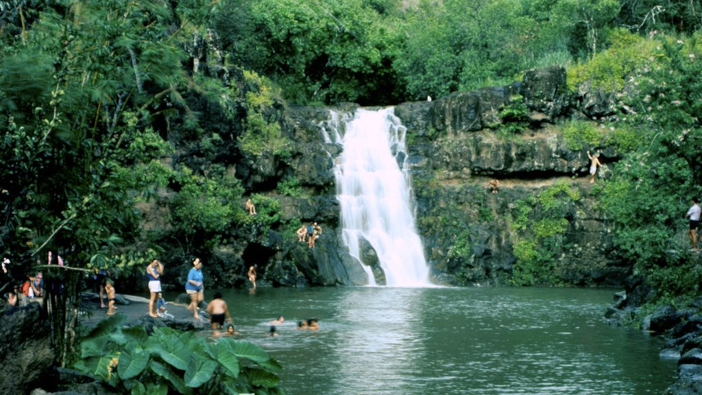 Waimea Falls Park featuring swimming, forest scenes and a cascade