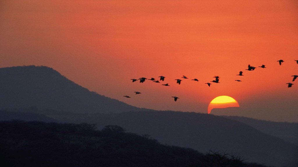 Kwazulu-Natal which includes landscape views, a sunset and bird life