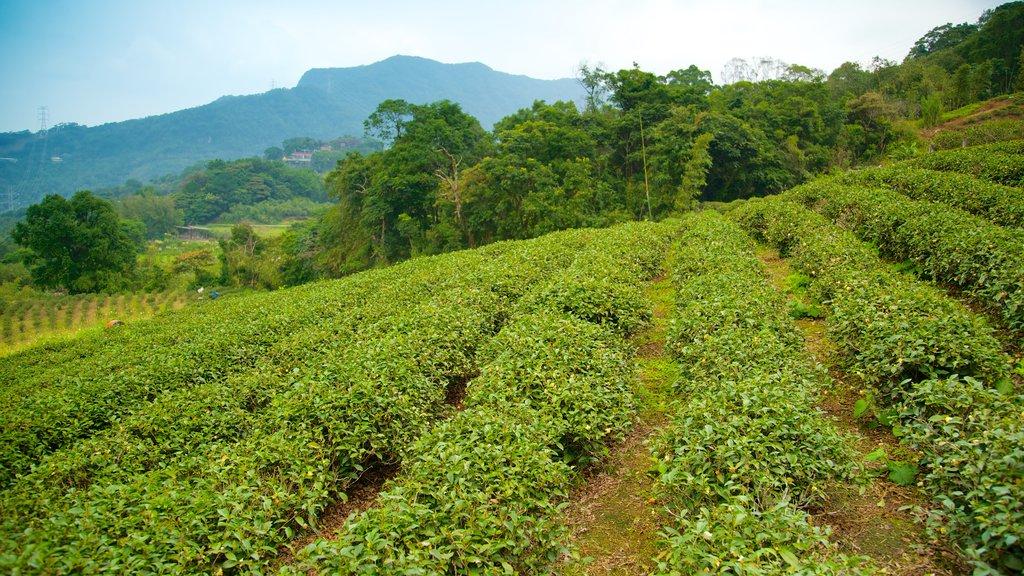 Taipéi que incluye tierras de cultivo, vistas de paisajes y montañas