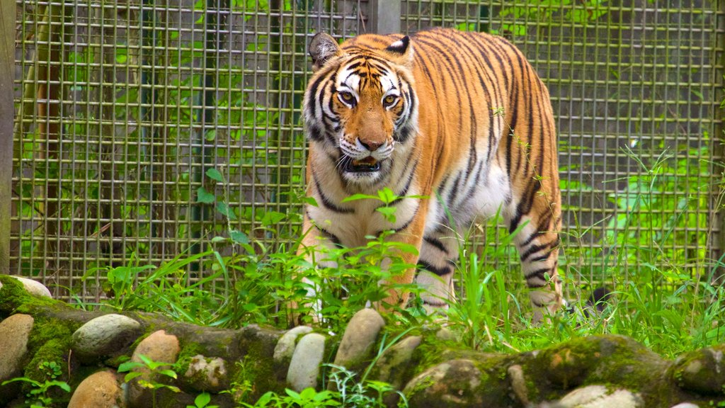 Zoo de Taipei mostrando animales del zoológico, animales peligrosos y animales terrestres
