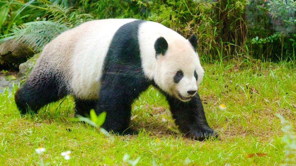 Zoo de Taipei ofreciendo animales del zoológico