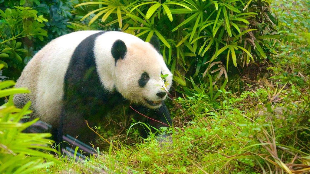 Zoo de Taipei que incluye animales del zoológico y animales peligrosos