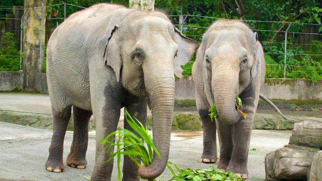Zoo de Taipei mostrando animales del zoológico y animales terrestres